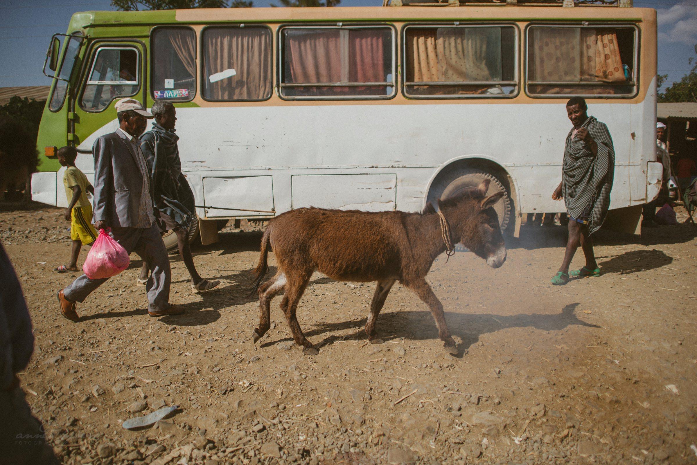 Esel, Streetphotography, Bus, Africa, Äthiopien