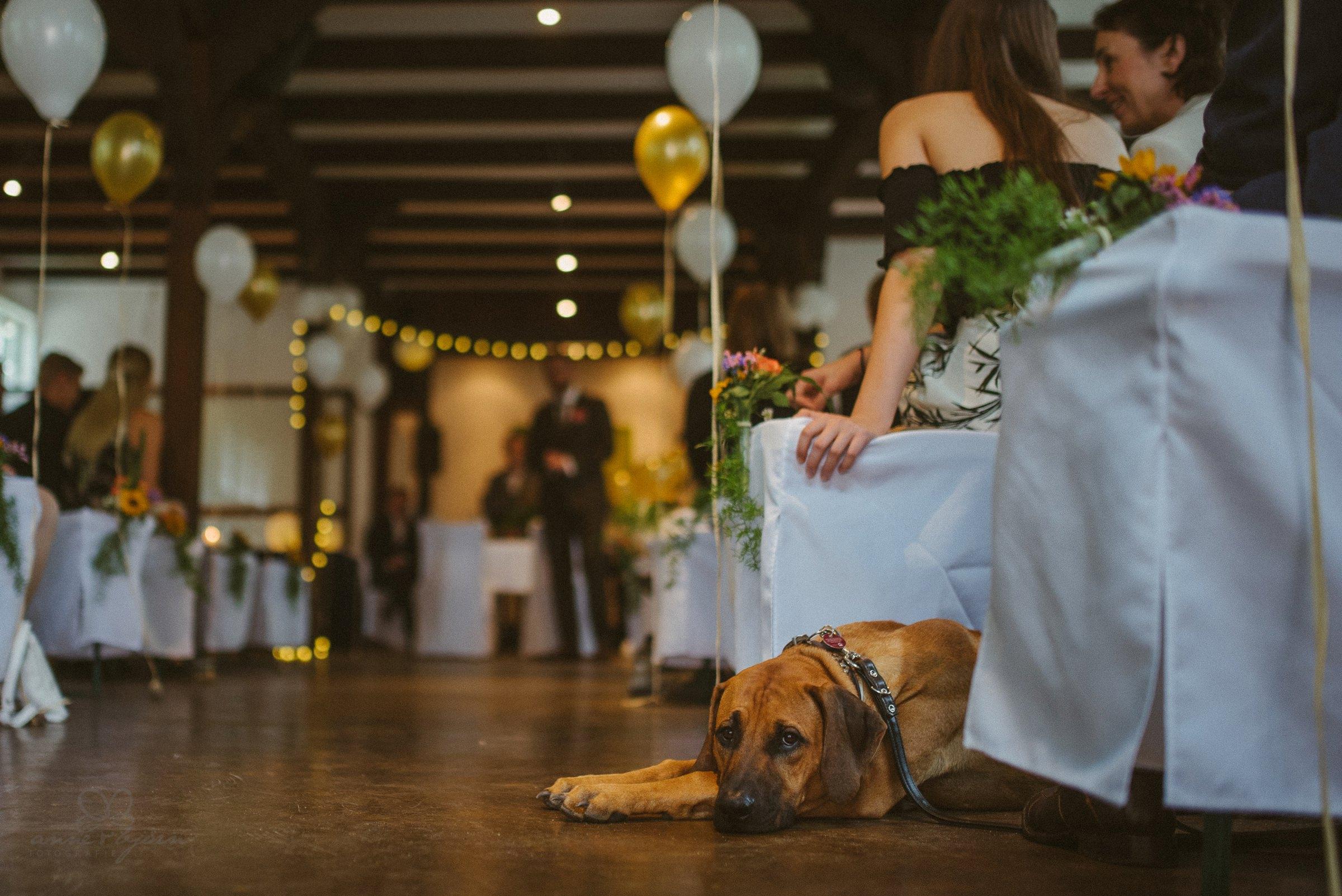 Hund, Hochzeit