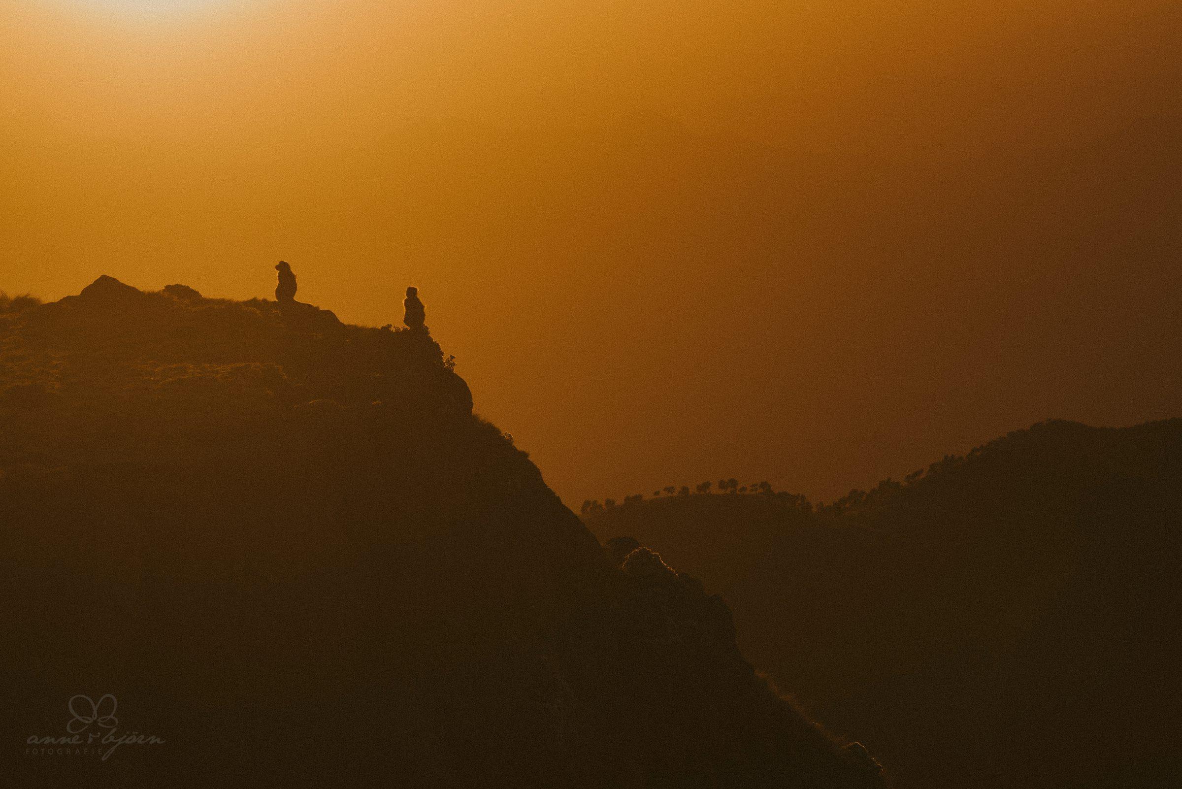 Affen, Gelada Affen, Geladas, Sonnenuntergang, Berghang, Tiere, Sunset