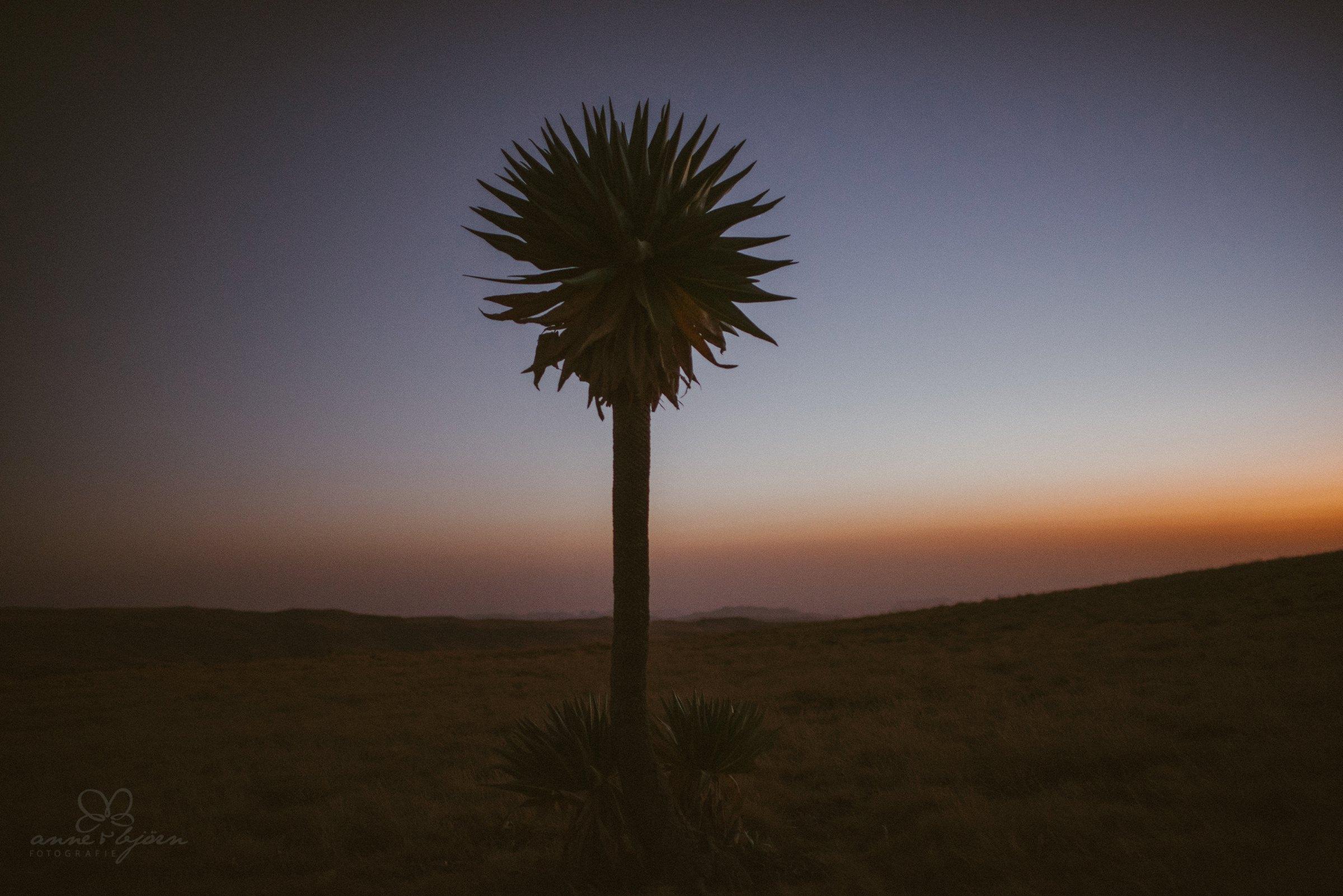 Palme, Sonnenuntergang, Afrika, Äthiopien, Wanderung, zelten