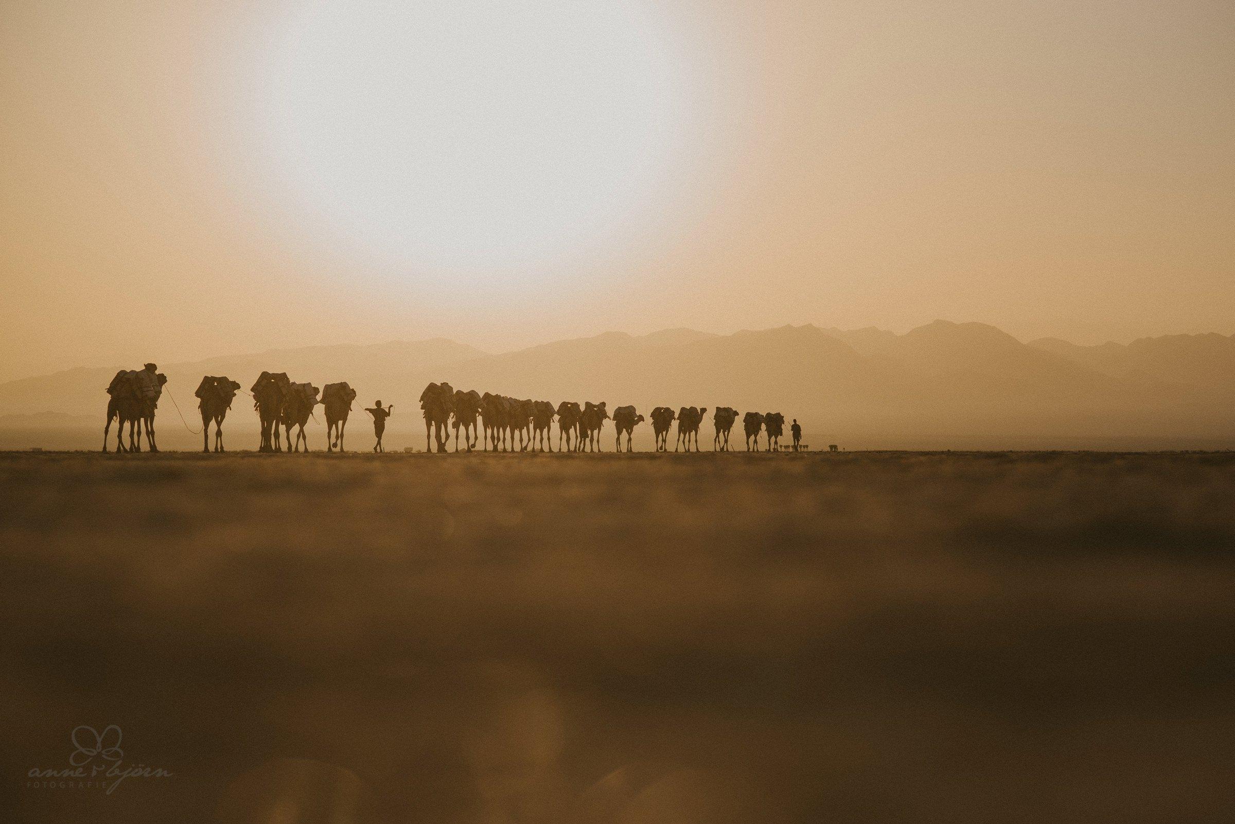 Camelcaravane, Kamelkaravane, Kamele, Salzwüste, Salzabbau Äthiopien, Sonnenuntergang