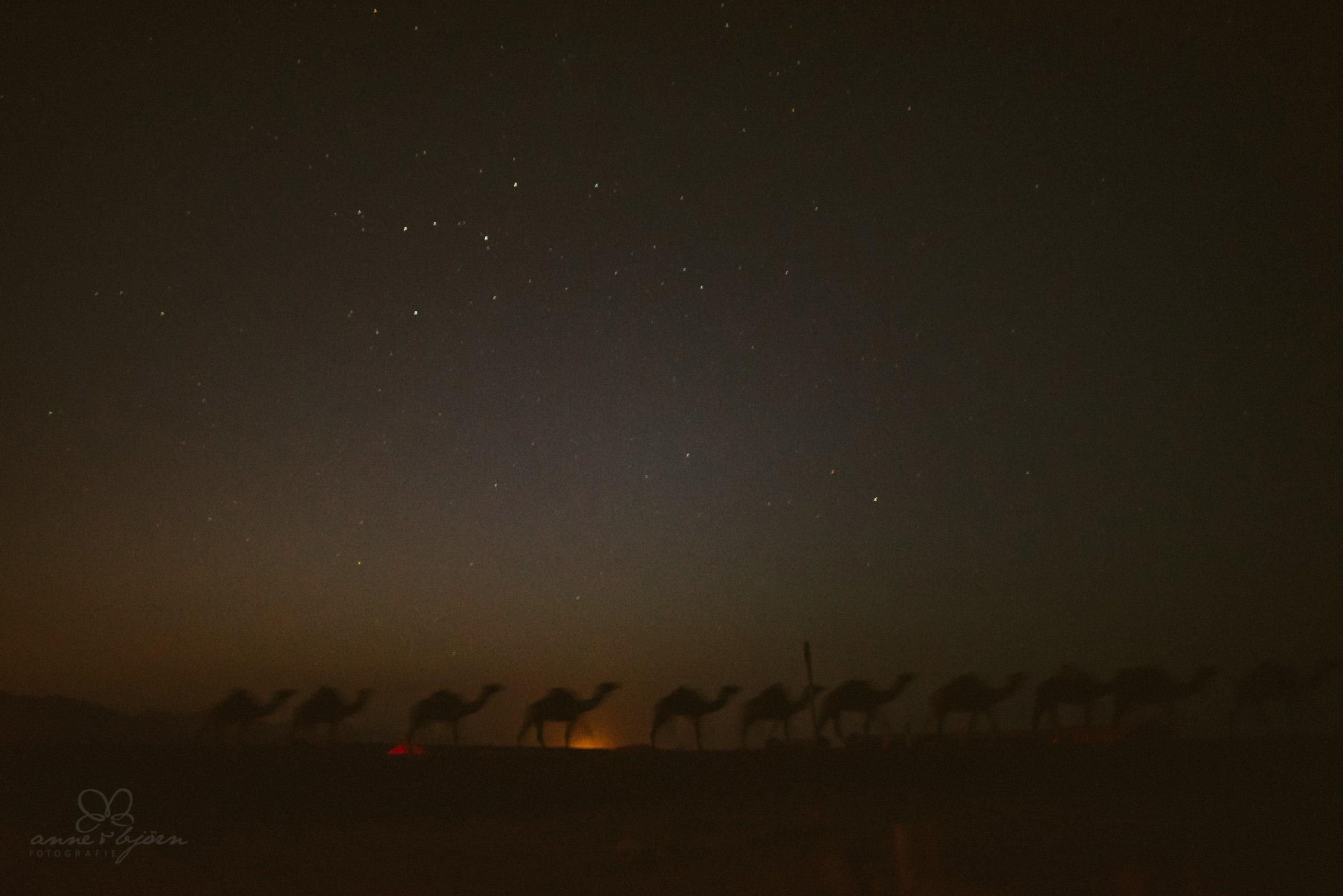 Kamele, Sonnenuntergang, Wüste, Sternenhimmel, Langzeitbelichtung