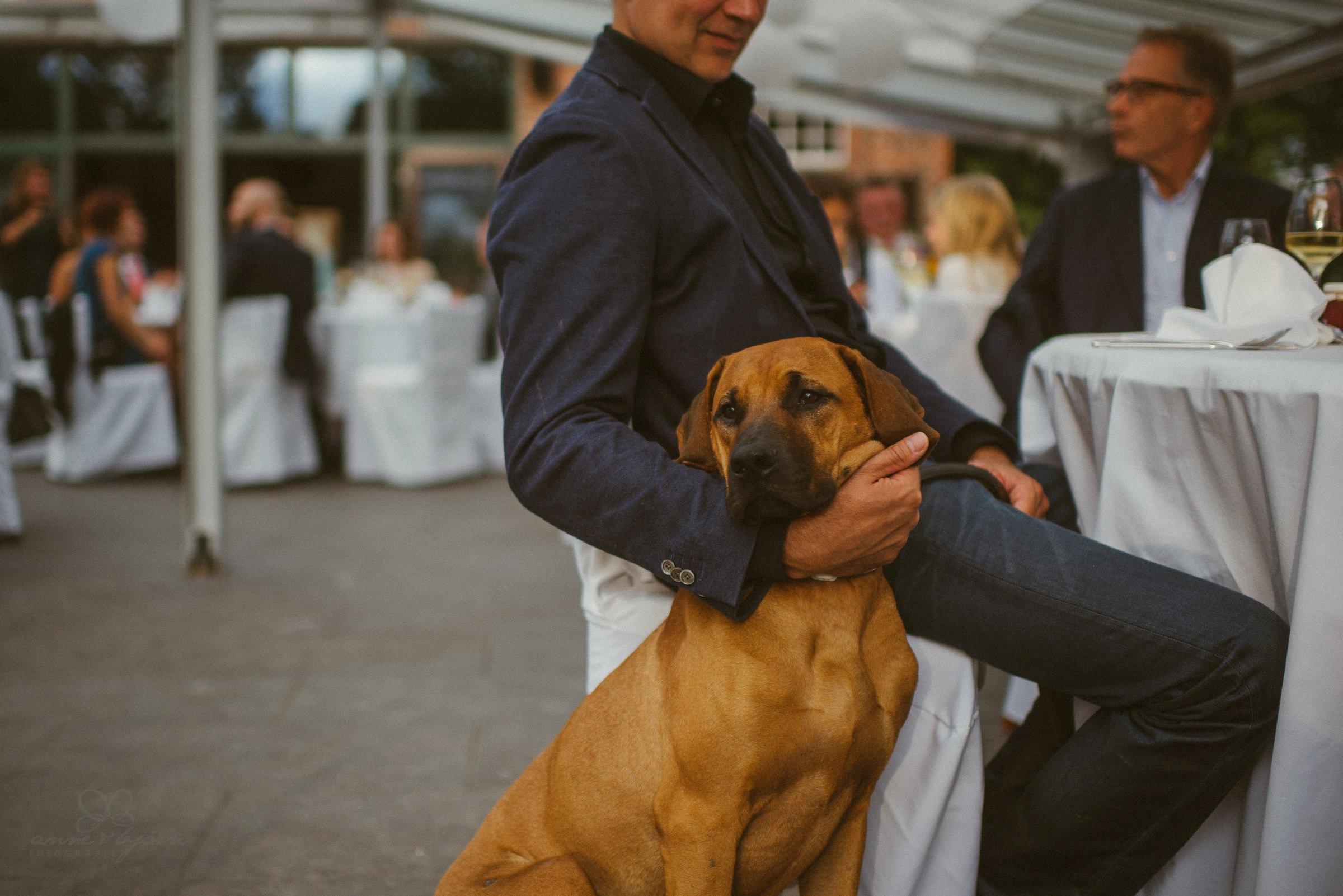 Hund, Hochzeit,