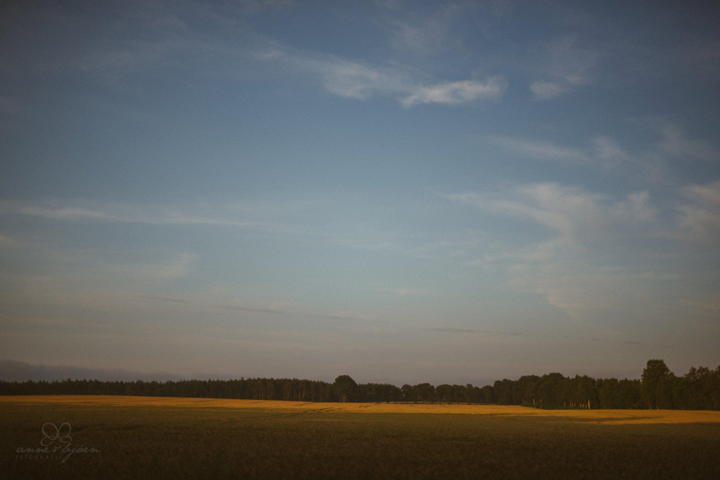 Landschaft, Heide, Feld